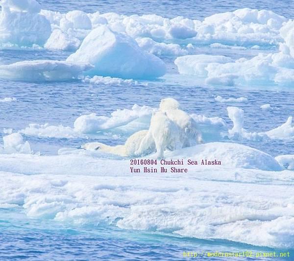 20160804Chukchi Sea polar bear894A9339-1 (640x568).jpg