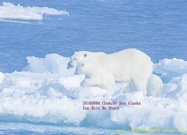 20160804Chukchi Sea polar bear894A9818-1 (640x462).jpg