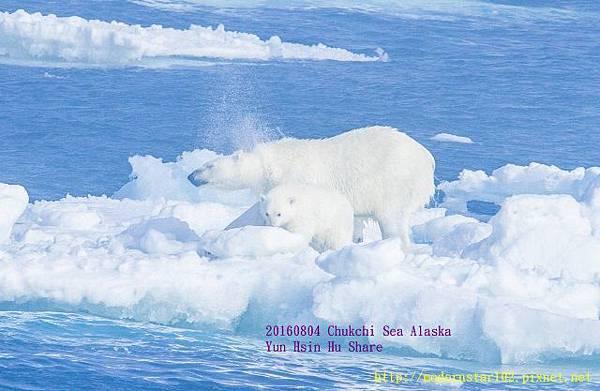 20160804Chukchi Sea polar bear894A9795-1 (640x417).jpg