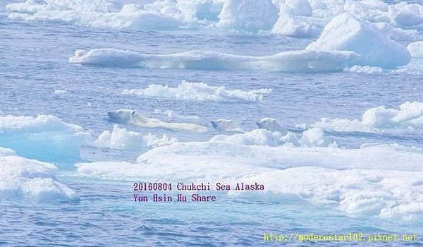 20160804Chukchi Sea polar bear3894A9351-1 (640x373).jpg