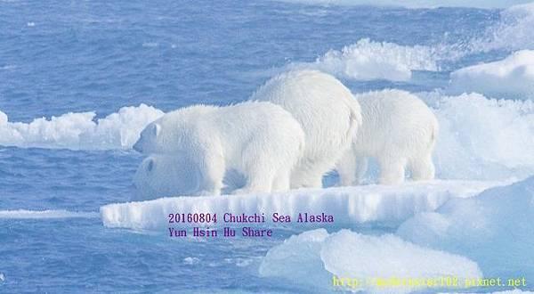 20160804Chukchi Sea polar bear2894A0088-1 (640x352).jpg