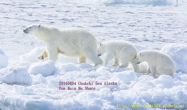 20160804Chukchi Sea polar bear3894A9191-1 (640x377).jpg
