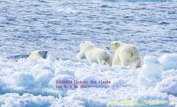 20160804Chukchi Sea polar bear3894A9227-1 (640x389).jpg