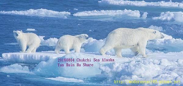 20160804Chukchi Sea polar bear2894A0044-1 (640x301).jpg