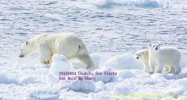 20160804Chukchi Sea polar bear3894A9210-1 (640x342).jpg