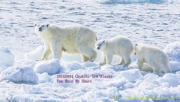 20160804Chukchi Sea polar bear3894A9193-1 (640x362).jpg
