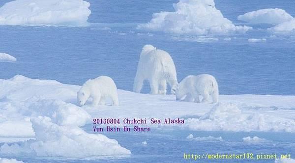 20160804Chukchi Sea polar bear2894A9537-1 (640x355).jpg