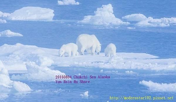 20160804Chukchi Sea polar bear3894A9524-1 (640x371).jpg