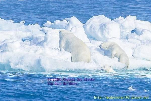 20160804Chukchi Sea polar bear3894A9756-1 (640x428).jpg