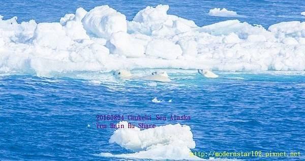 20160804Chukchi Sea polar bear3894A9732-1 (640x338).jpg