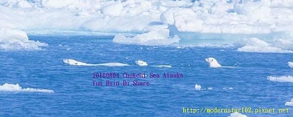 20160804Chukchi Sea polar bear3894A9697-1 (640x256).jpg
