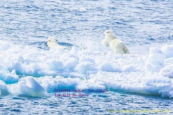 20160804Chukchi Sea polar bear3894A9229-1 (640x427).jpg