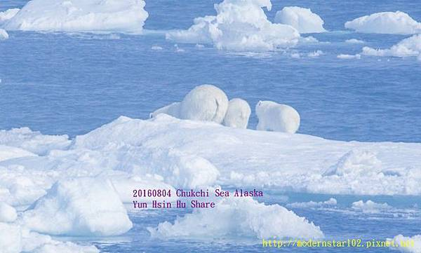 20160804Chukchi Sea polar bear3894A9608-1 (640x385).jpg