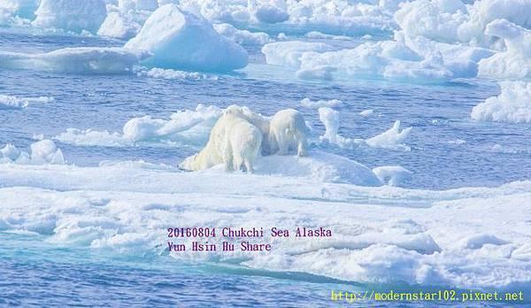 20160804Chukchi Sea polar bear3894A9338-1 (640x371).jpg