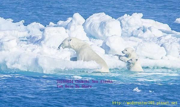 20160804Chukchi Sea polar bear3894A9750-1 (640x381).jpg