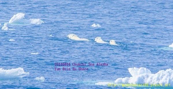 20160804Chukchi Sea polar bear3894A9400-1 (640x328).jpg