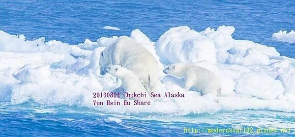 20160804Chukchi Sea polar bear3894A9768-1 (640x297).jpg