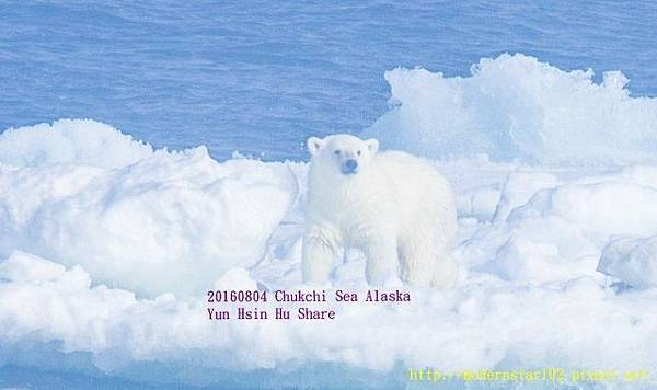 20160804Chukchi Sea polar bear3894A9830-1 (640x379).jpg