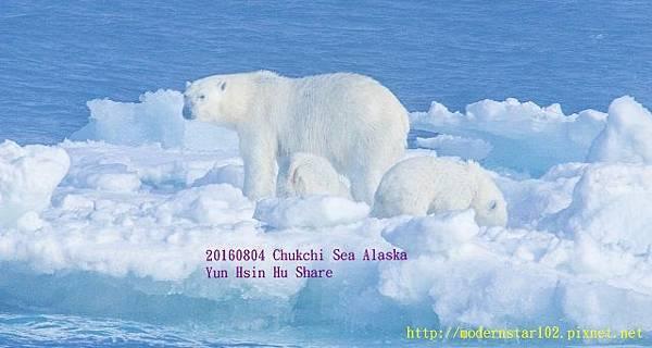 20160804Chukchi Sea polar bear3894A9845-1 (640x341).jpg