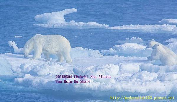 20160804Chukchi Sea polar bear3894A9963-1 (640x367).jpg