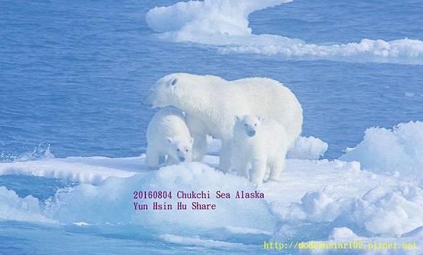 20160804Chukchi Sea polar bear3894A9998-1 (640x386).jpg