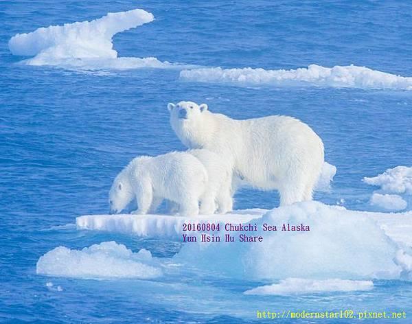 20160804Chukchi Sea polar bear894A0021-1 (640x503).jpg