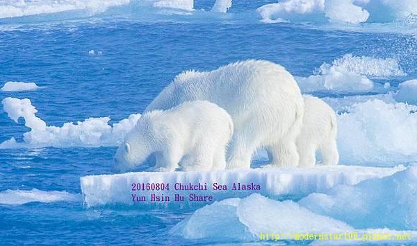 20160804Chukchi Sea polar bear3894A0072-1 (640x378).jpg