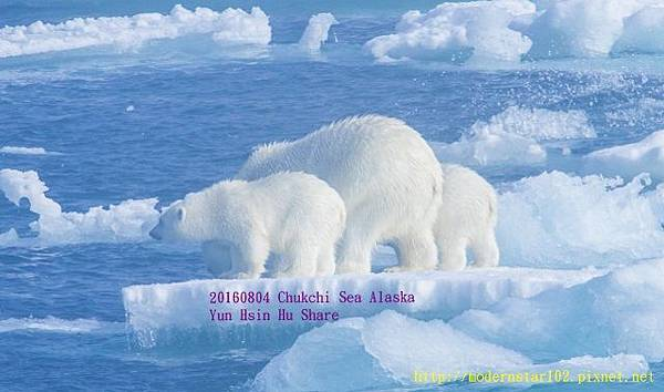 20160804Chukchi Sea polar bear3894A0075-1 (640x377).jpg