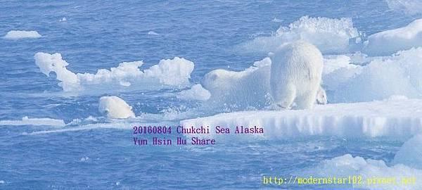 20160804Chukchi Sea polar bear3894A0092-1 (640x288).jpg