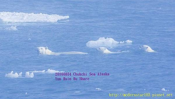 20160804Chukchi Sea polar bear3894A0106-1 (640x362).jpg