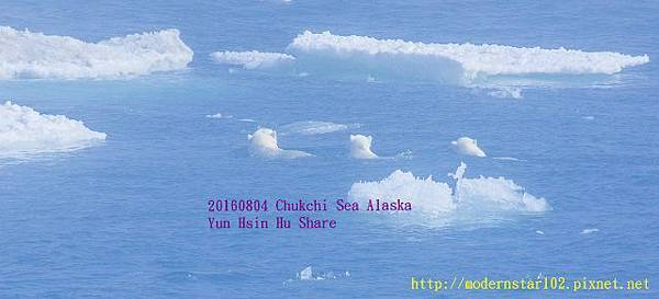 20160804Chukchi Sea polar bear3894A0123-1 (640x291).jpg