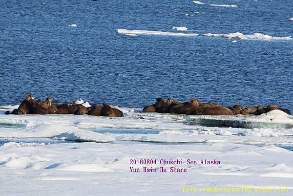 20160804Chukchi Sea polar bear894A0215 (640x427).jpg