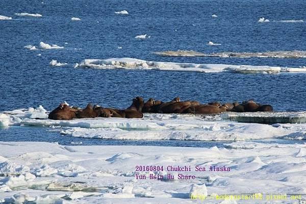 20160804Chukchi Sea polar bear894A0210 (640x427).jpg