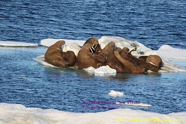 20160804Chukchi Sea polar bear894A0523 (640x427).jpg
