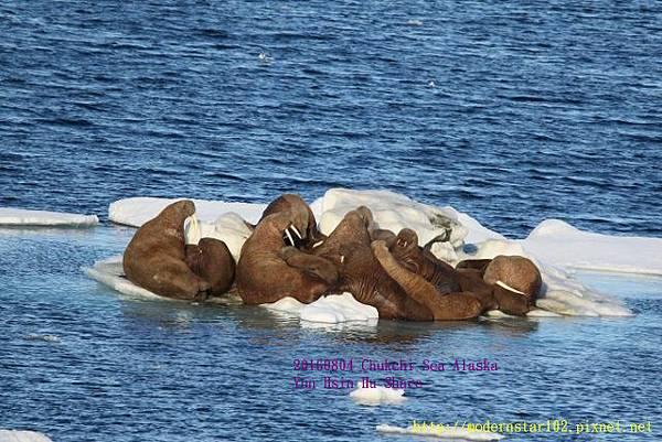 20160804Chukchi Sea polar bear894A0526 (640x427).jpg