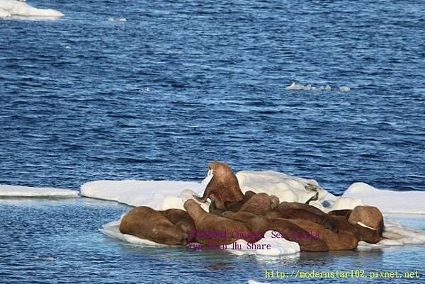 20160804Chukchi Sea polar bear894A0522 (640x427).jpg