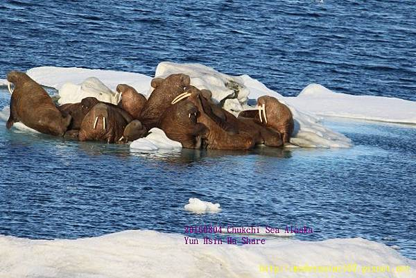 20160804Chukchi Sea polar bear894A0534 (640x427).jpg