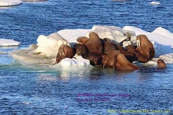 20160804Chukchi Sea polar bear894A0559 (640x427).jpg
