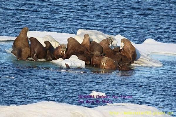 20160804Chukchi Sea polar bear894A0542 (640x427).jpg