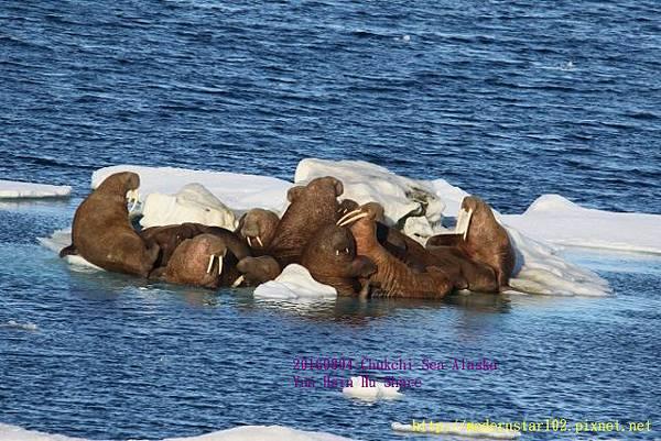 20160804Chukchi Sea polar bear894A0541 (640x427).jpg