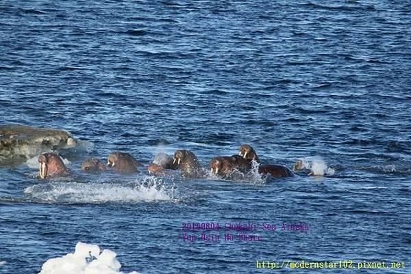 20160804Chukchi Sea polar bear894A0464 (640x427).jpg