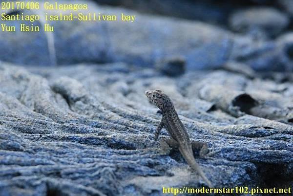 1060406 Santiago-Sullivan bay894A2152 (640x427).jpg