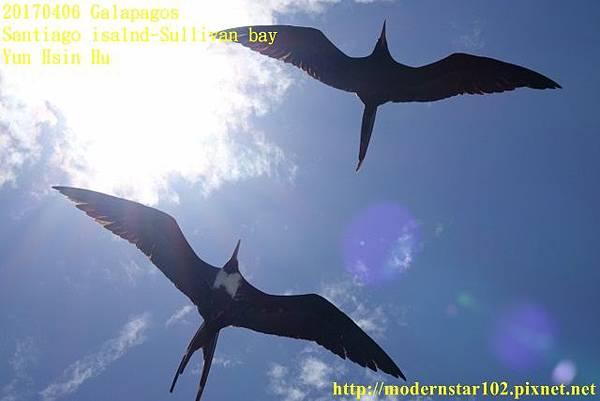 1060406 Santiago-Sullivan bayDSC06815 (640x427).jpg