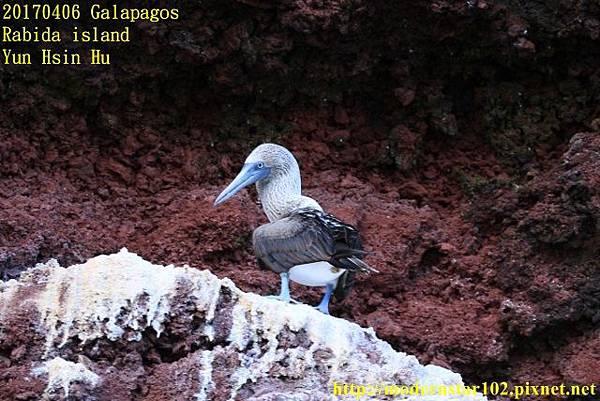 1060406 Rabida island894A2550 (640x427).jpg