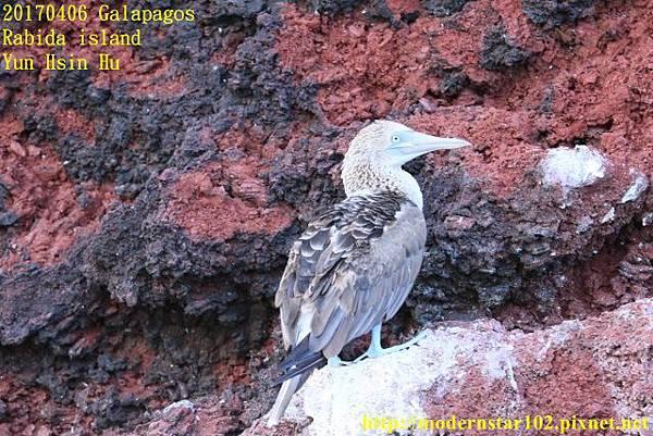 1060406 Rabida island894A2430 (640x427).jpg