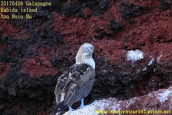 1060406 Rabida island894A2419 (640x427).jpg