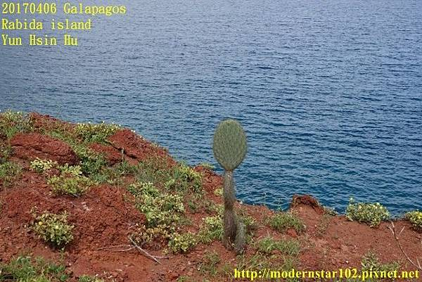 1060406 Rabida islandDSC06897 (640x427).jpg