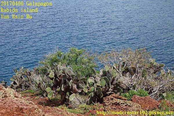 1060406 Rabida islandDSC06891 (640x427).jpg
