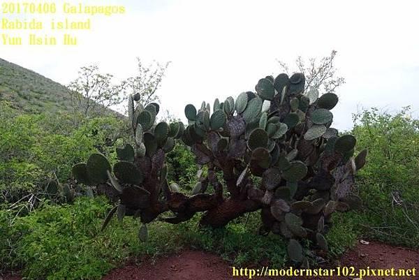 1060406 Rabida islandDSC06991 (640x427).jpg