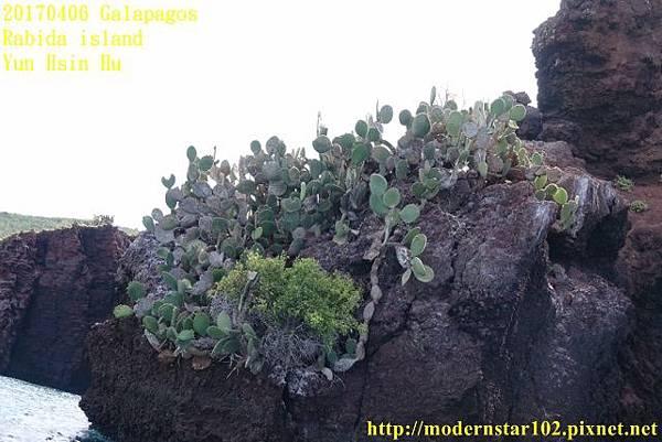 1060406 Rabida islandDSC07069 (640x427).jpg